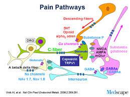 Pain Pathways