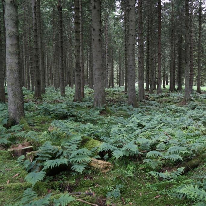 Returnings    Jerwood Open Forest