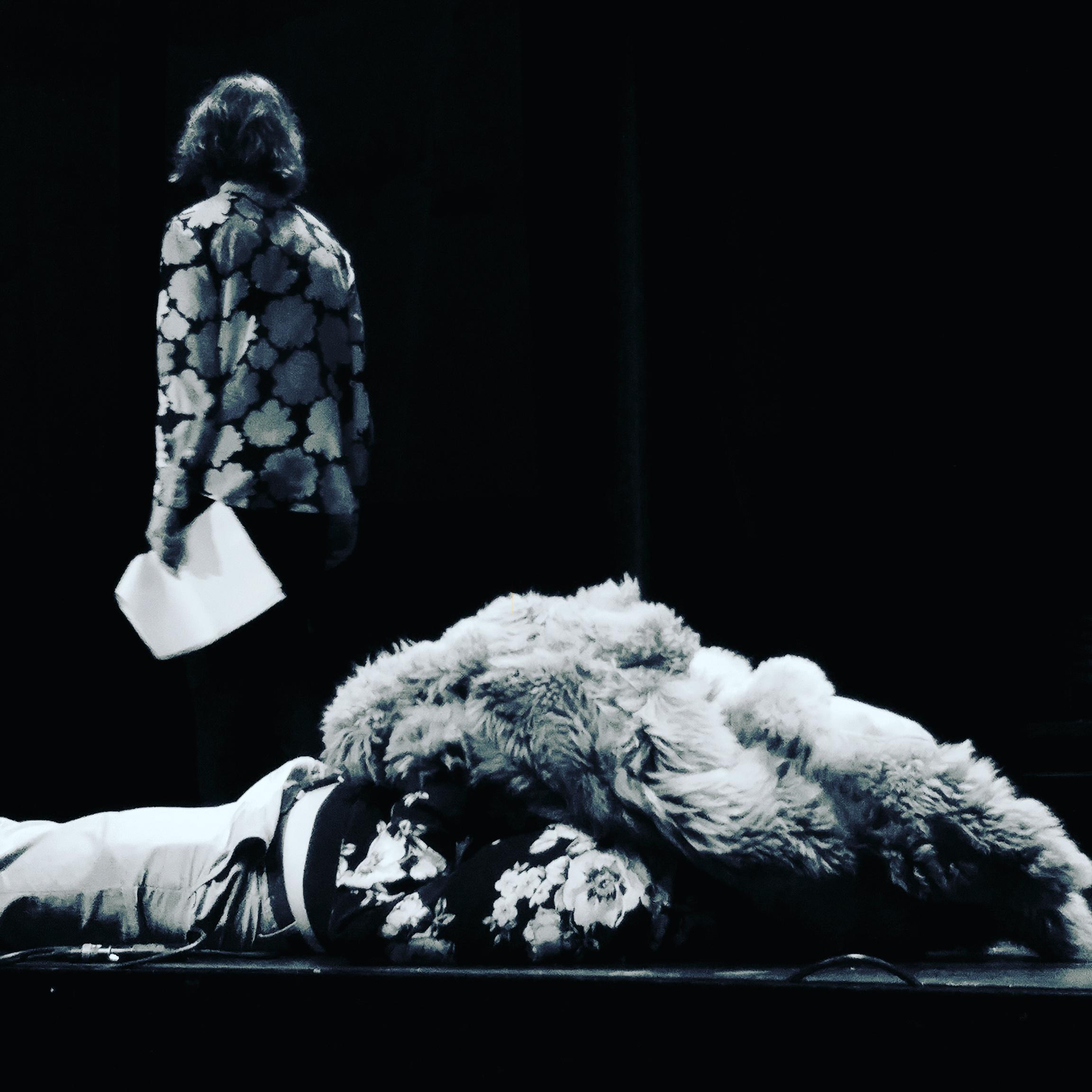 Stockholm International Poetry Festival: Sweden 2016
