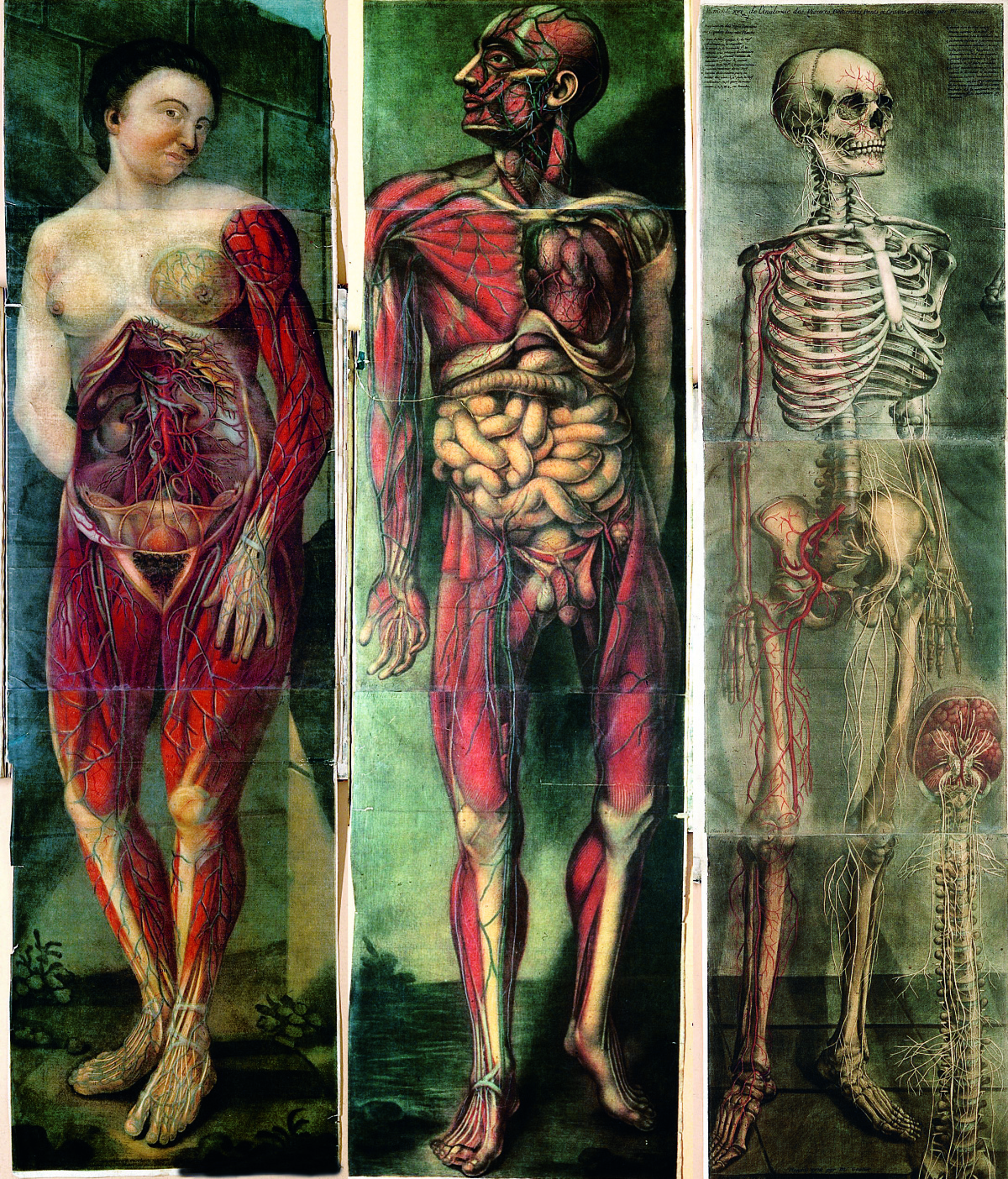 Three plates from the first full-colour anatomical atlas – Jacques Fabien Gautier d'Agoty's Myologie (1746-48).  Photograph: Wellcome Library, London