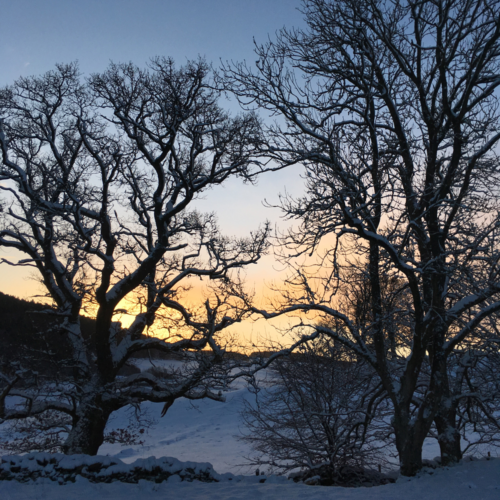 Sunrise and snow really shows off the shape of these trees. Near Galashiels in the Scottish Borders.