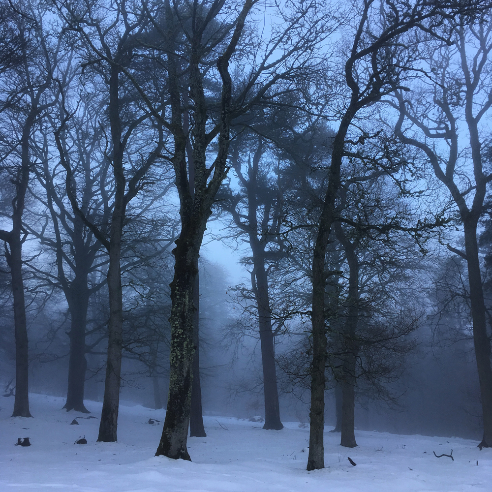 Misty morning with snow- it looked so other-worldly.