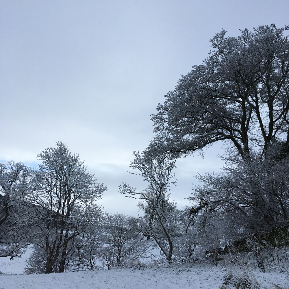 This line of trees doesn't usually grab my attention, but it looks spectacular with snow covering it.