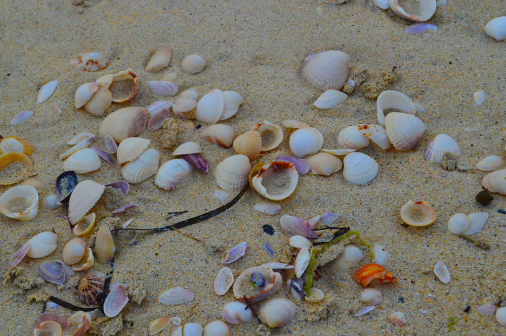 Shells on Luskentyre