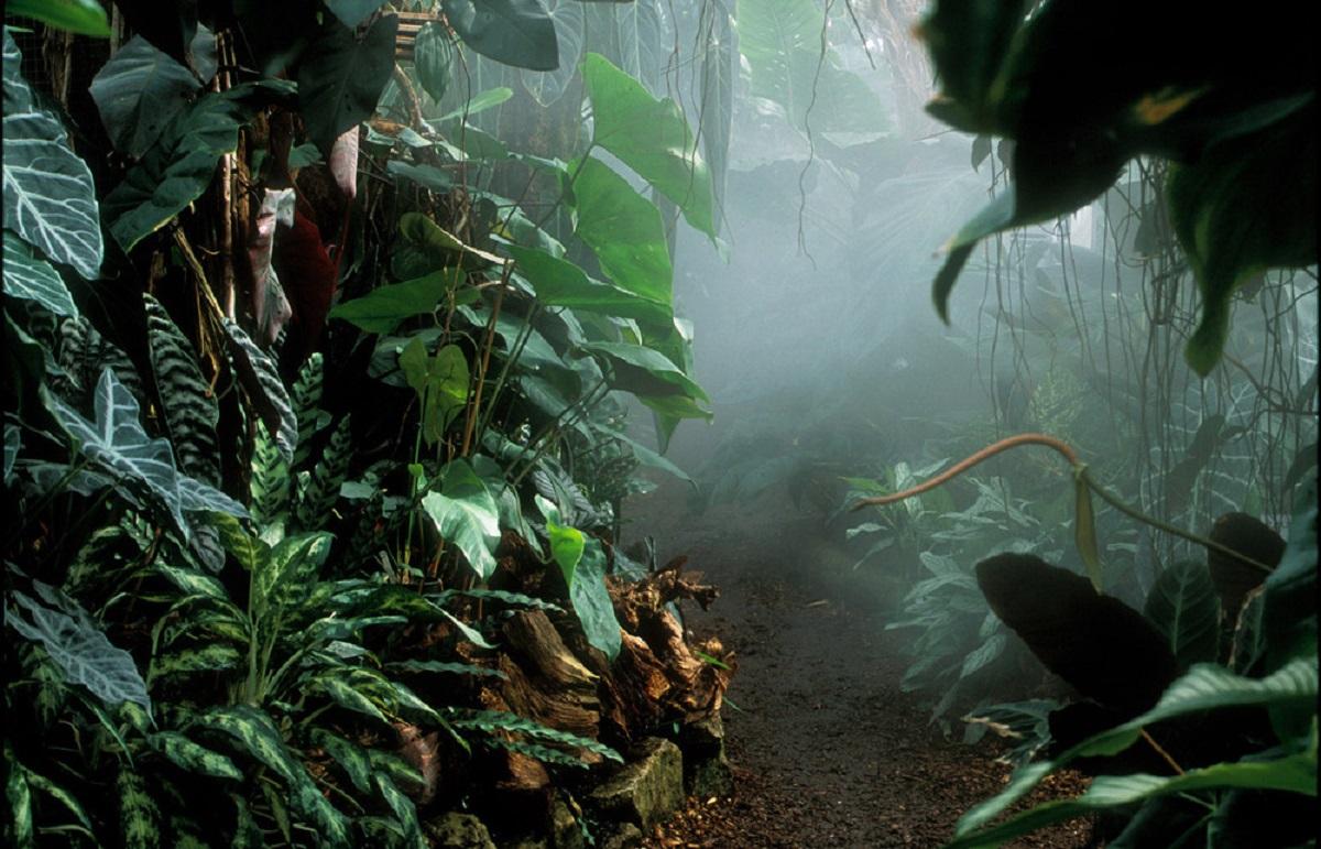 living-rainforest-newbury-1200.jpg