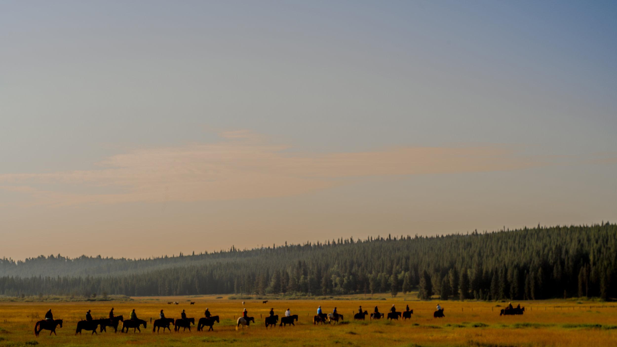 horses-in-wyoming copy.jpg