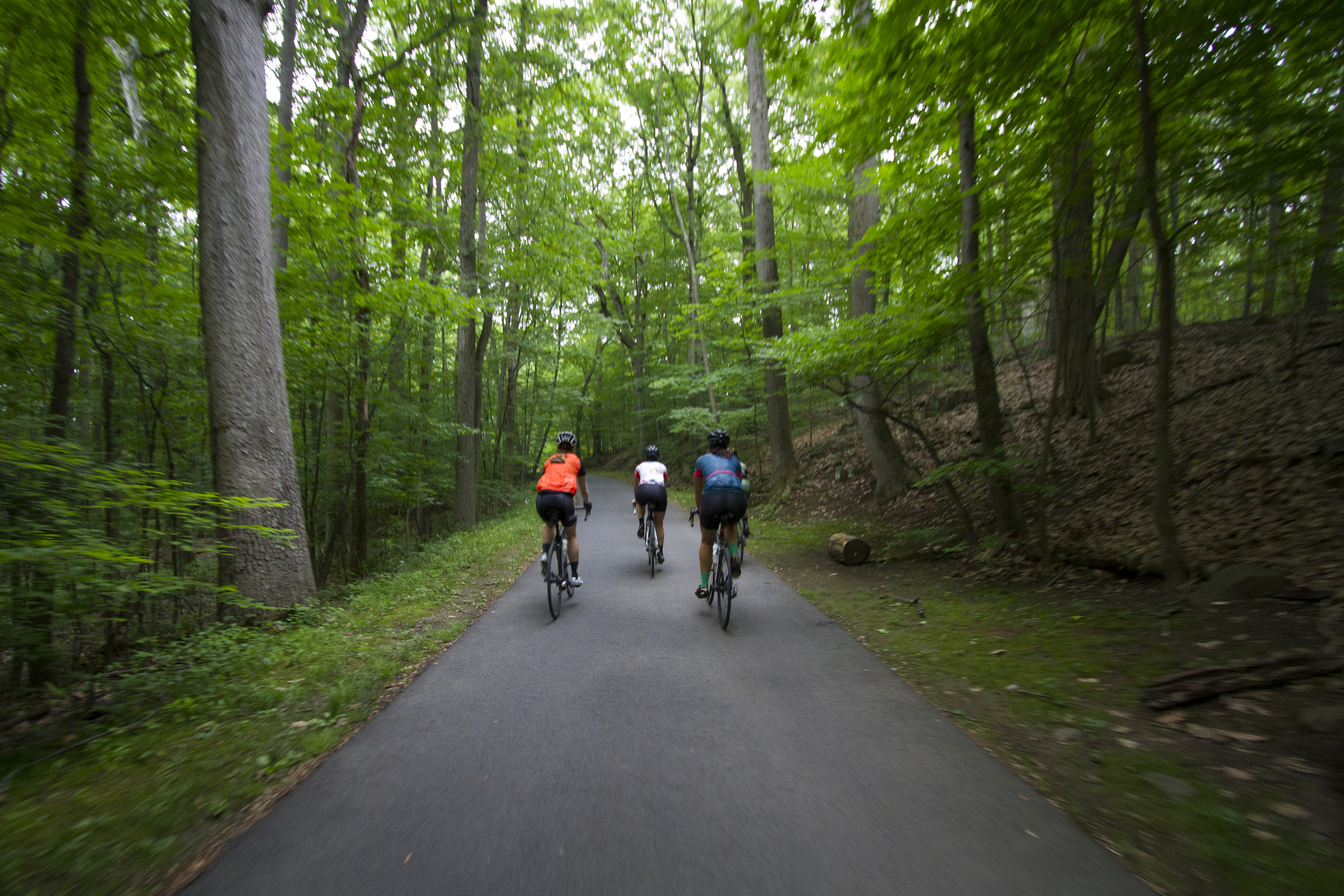 A small group enjoyed the wooded trails on the way back from Piermont.