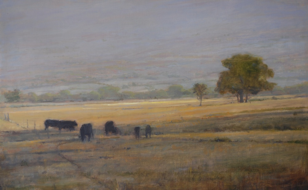 Taos Field with Black Cows