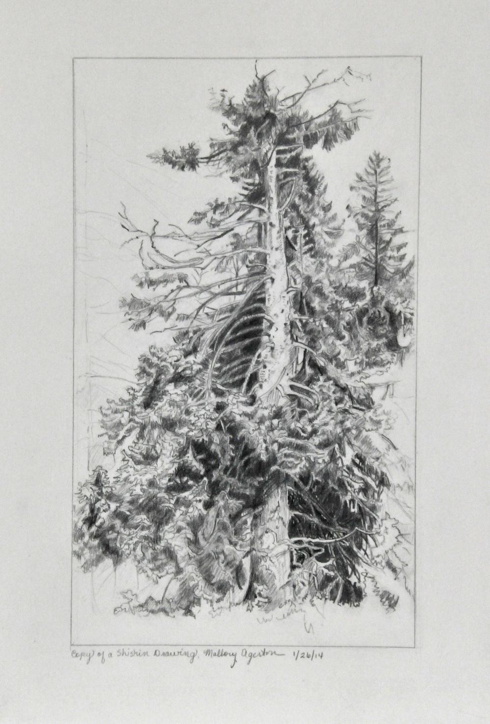 Master copy of Shishkin Tree