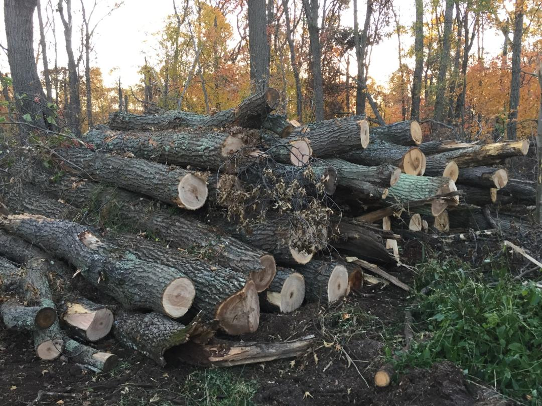 We lost much of our forest in the storm. This is one of ten piles this size we've hauled out over the past year.