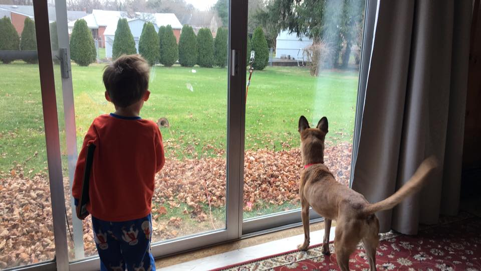 Eddie and the Erfurt's dog, Suki, look forward to going outside.