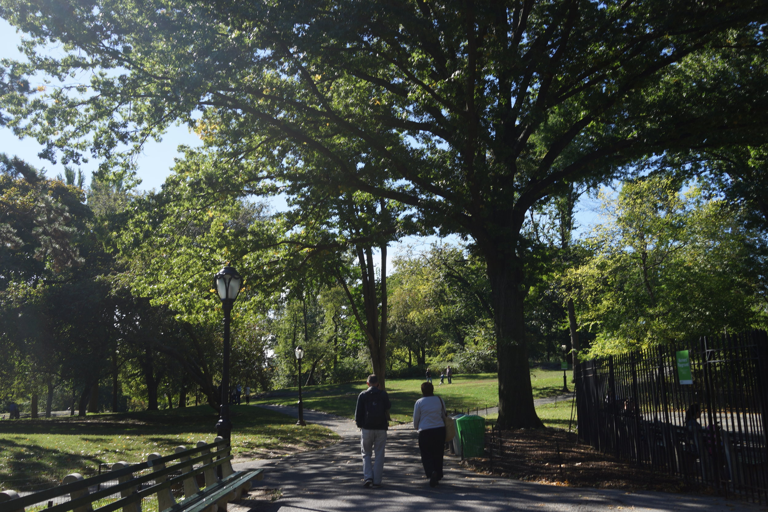 We can't all have an Olmsted park, but thoughtful landscape design goes a long way.