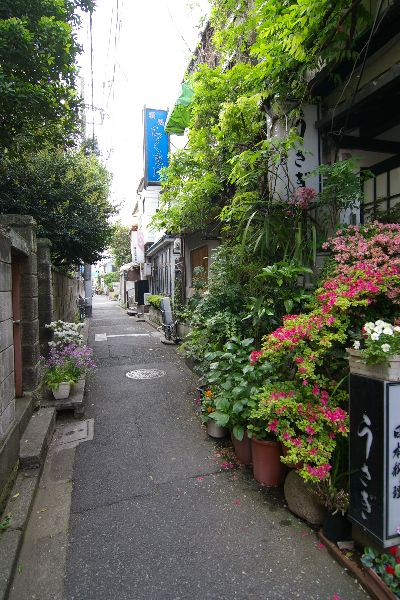 Nezu district, Tokyo, Japan  (Source)