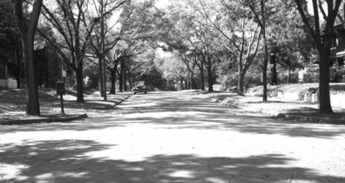 Tulsa street trees in 1950. (Source: Beryl Ford Collection)