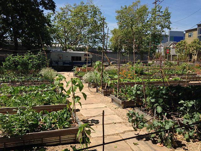 2. Farming - Turn that lot into productive, nourishing land.