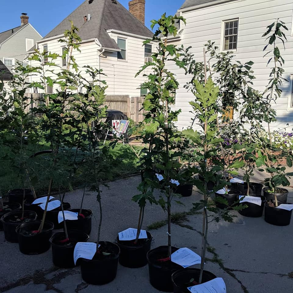 New street trees destined for Joseph's neighborhood in South Bend, Indiana
