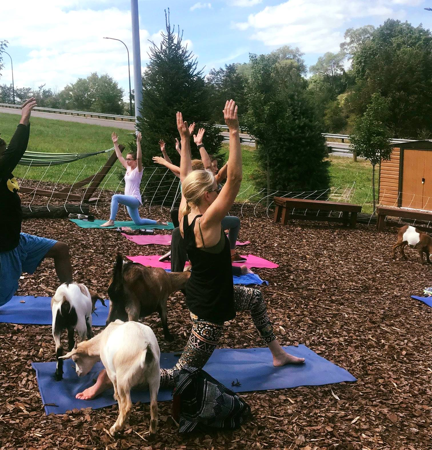 Goat yoga in the Innerbelt National Forest