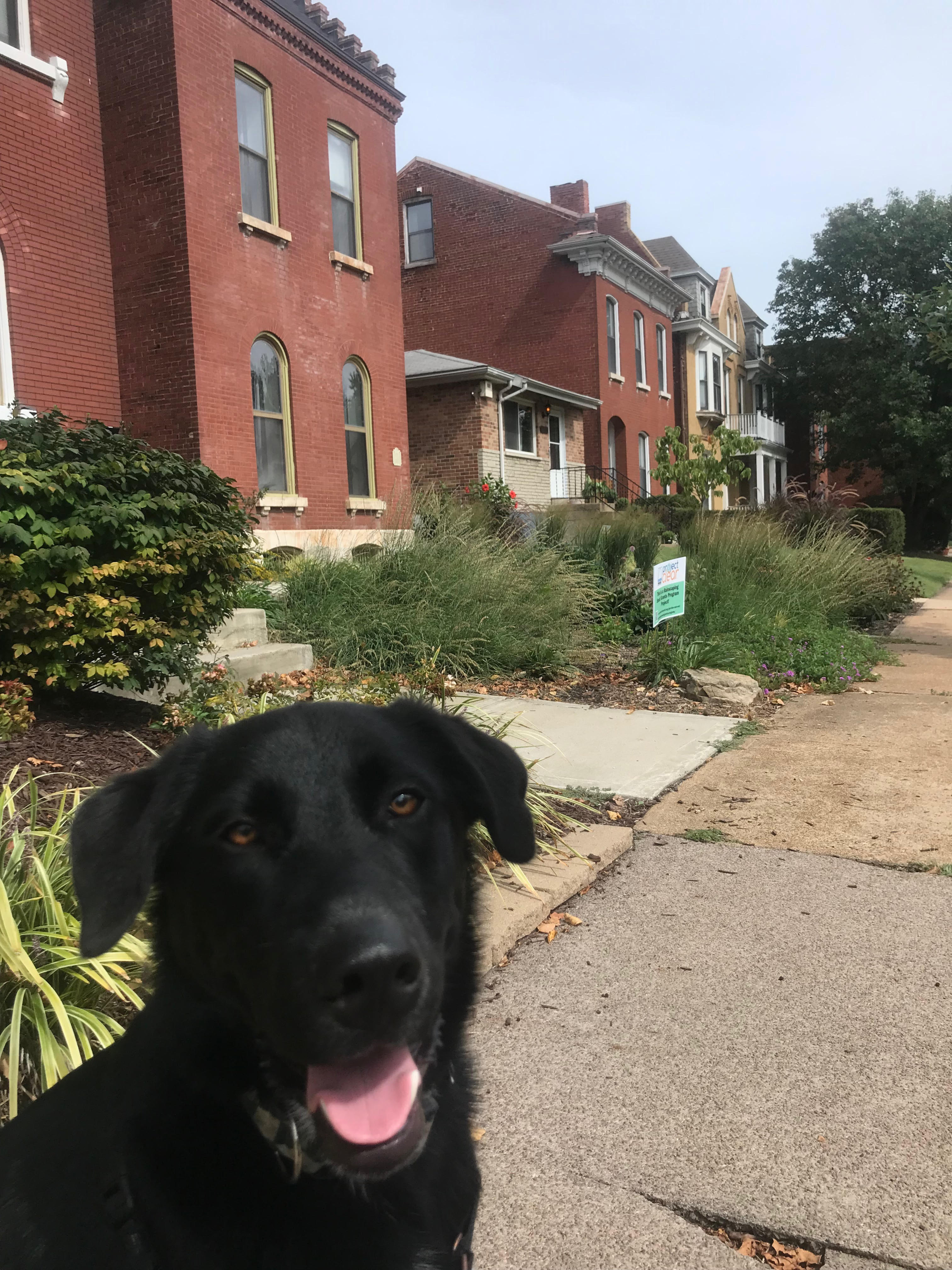Zozo shows off a few of his neighbors: a larger single family, a smaller single family bungalow, a single family converted to a top/bottom duplex, and a four-family.