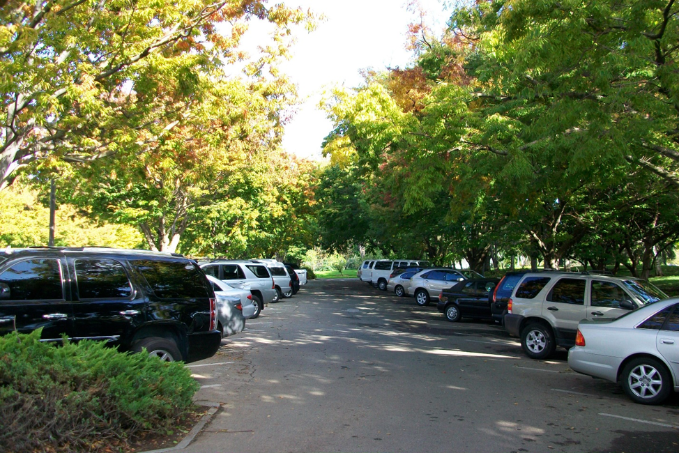 A well-shaded parking lot in Sacramento. Source:   Georgia Silvera Seamans @ LocalEcologist.org
