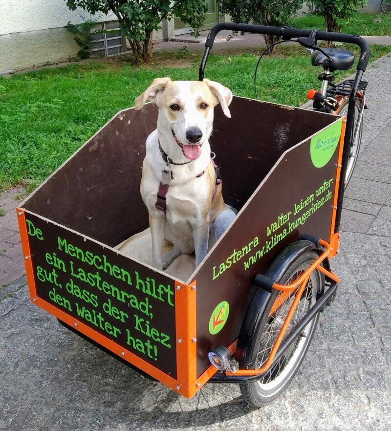Walter-Hund.jpg