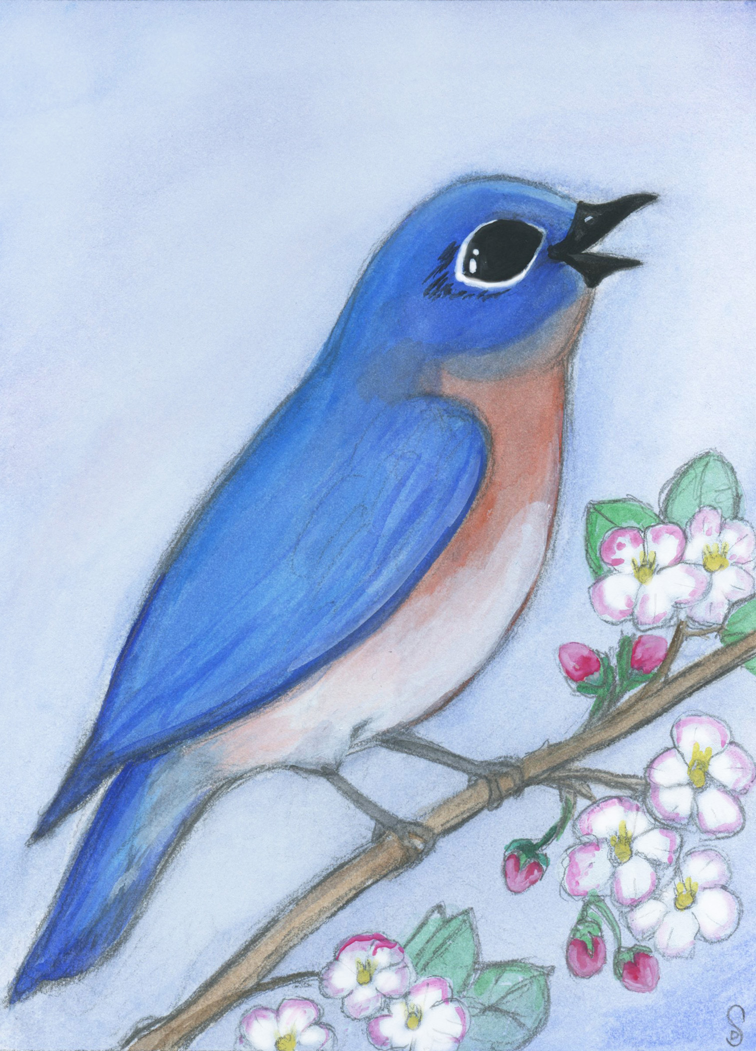 Bluebird and the Apple Blossoms