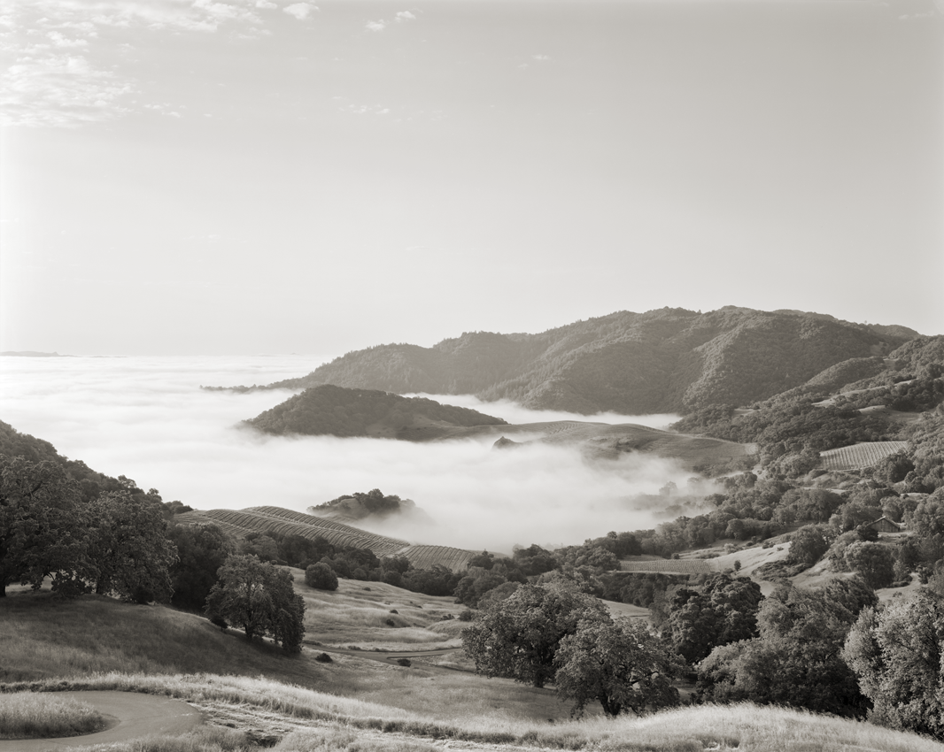 Summer: Fog fills the Napa Valley, and warms in the morning sun, rising into the Cain Vineyard.  The winery  reserves a portion of each vintage of Cain 5 to be released a decade after the harvest.. (Platinum Print Copyright © 2010 Olaf Beckmann)