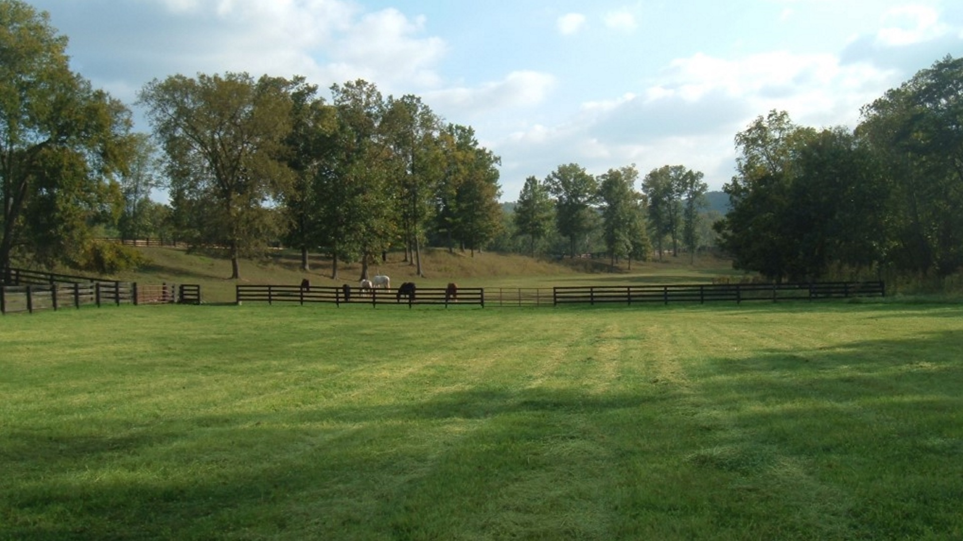 Pasture 4