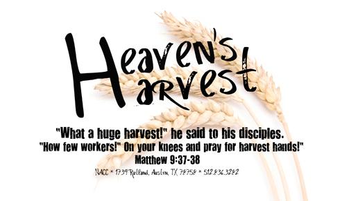 iStock_Wheat for Heaven's Harvest 11-10.jpg