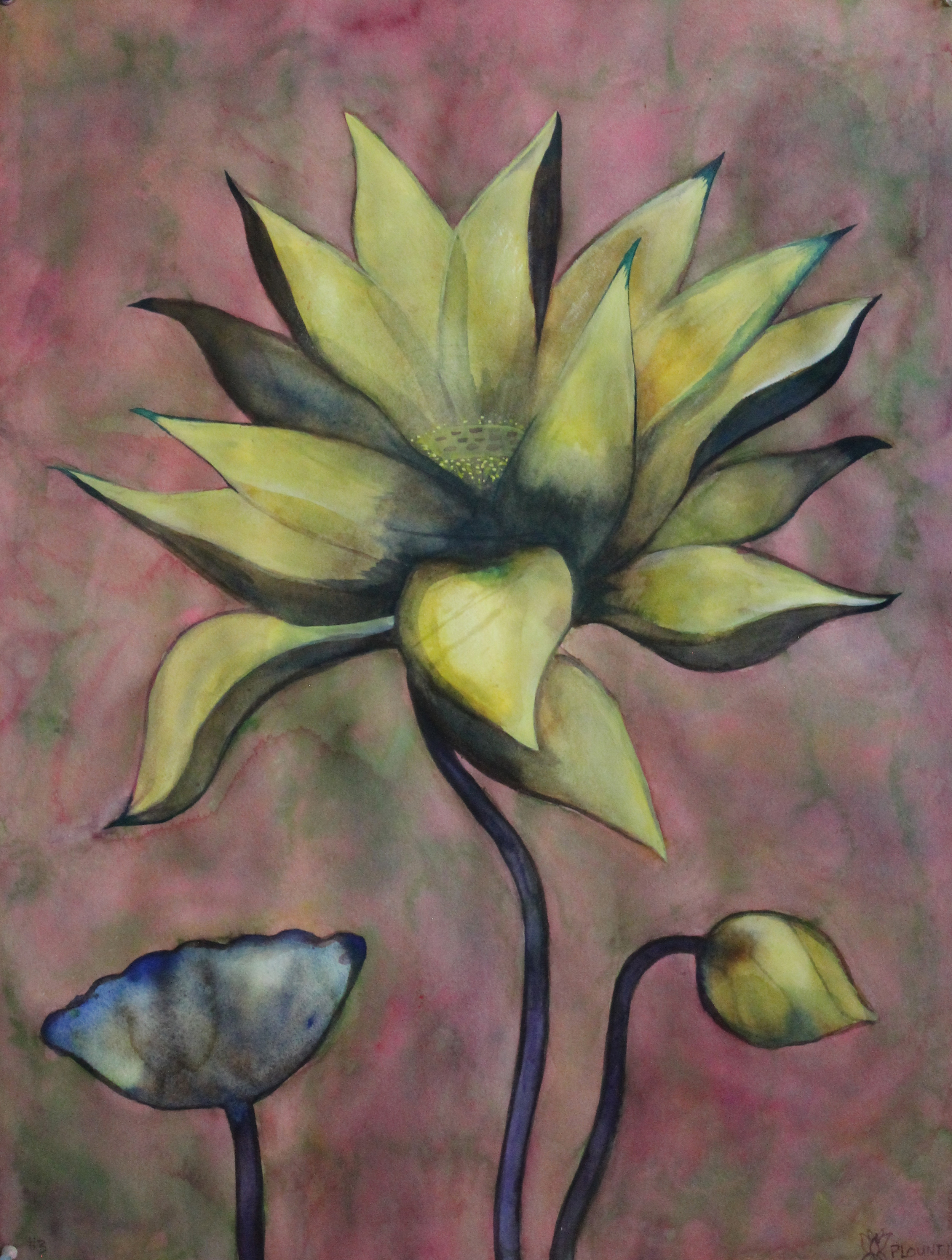 """Lotus    Watercolor on 140# Arches WC Paper 30"""" x 22"""" each  ©2013"""