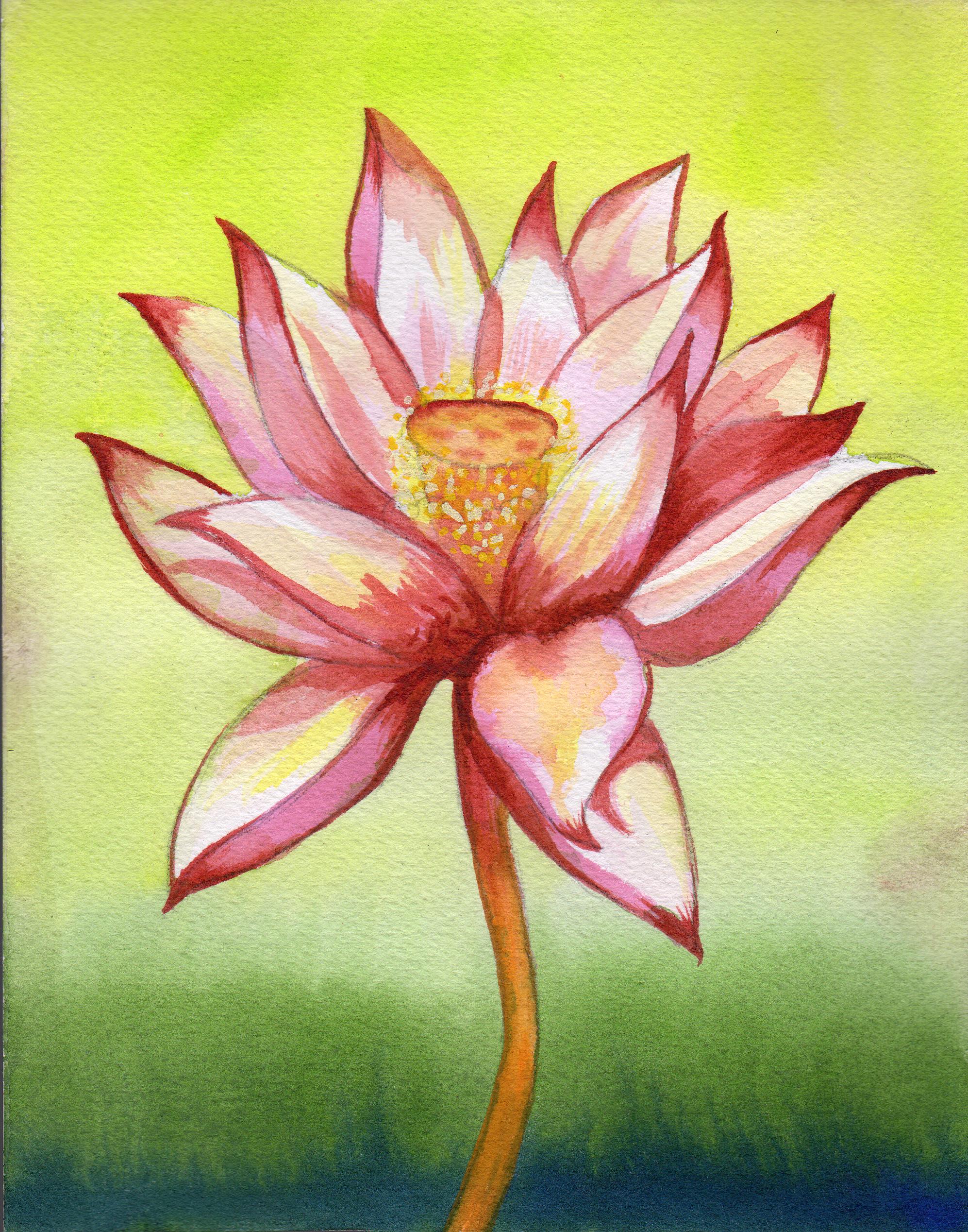 small lotus 9sm.png