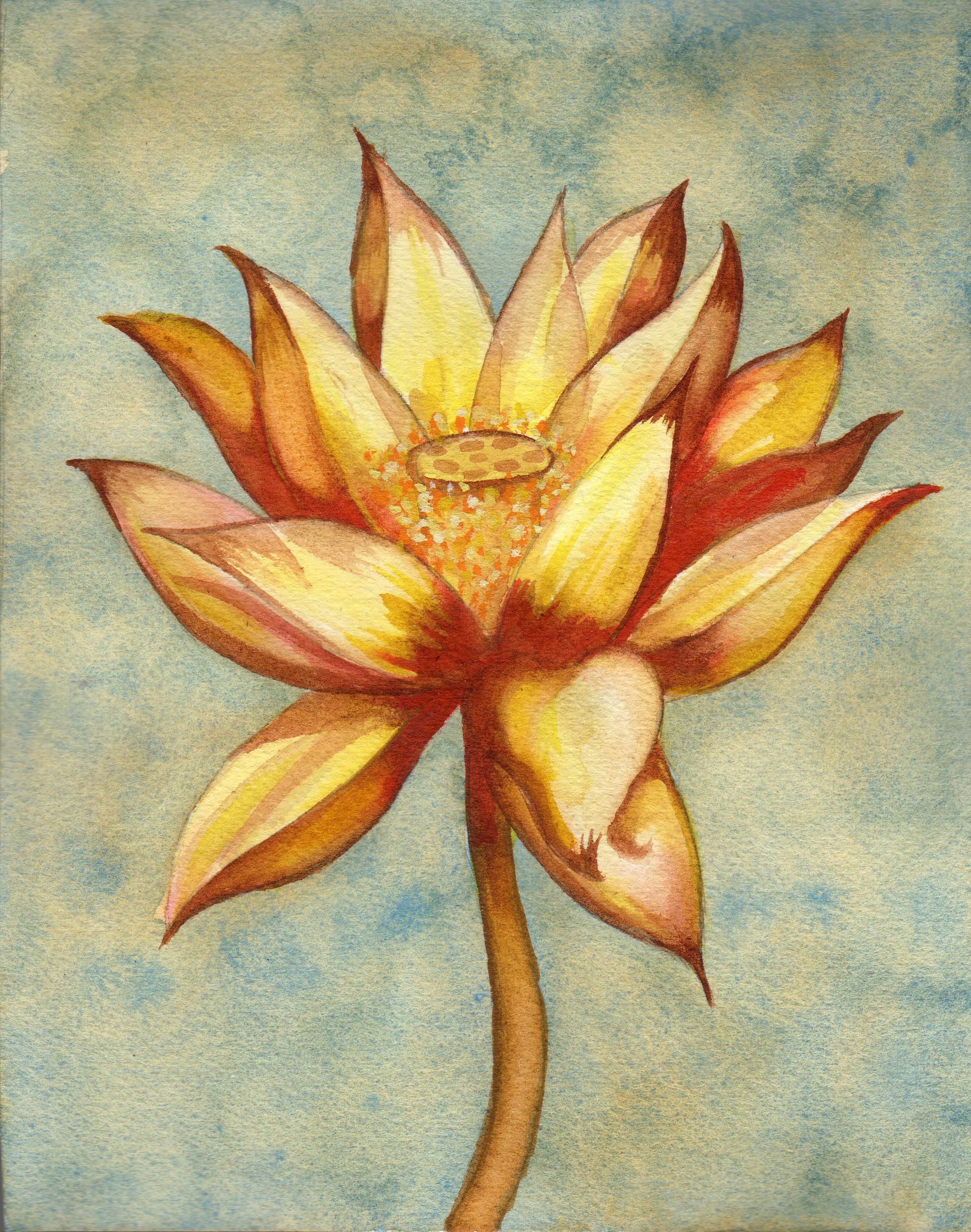 small lotus 11 .png