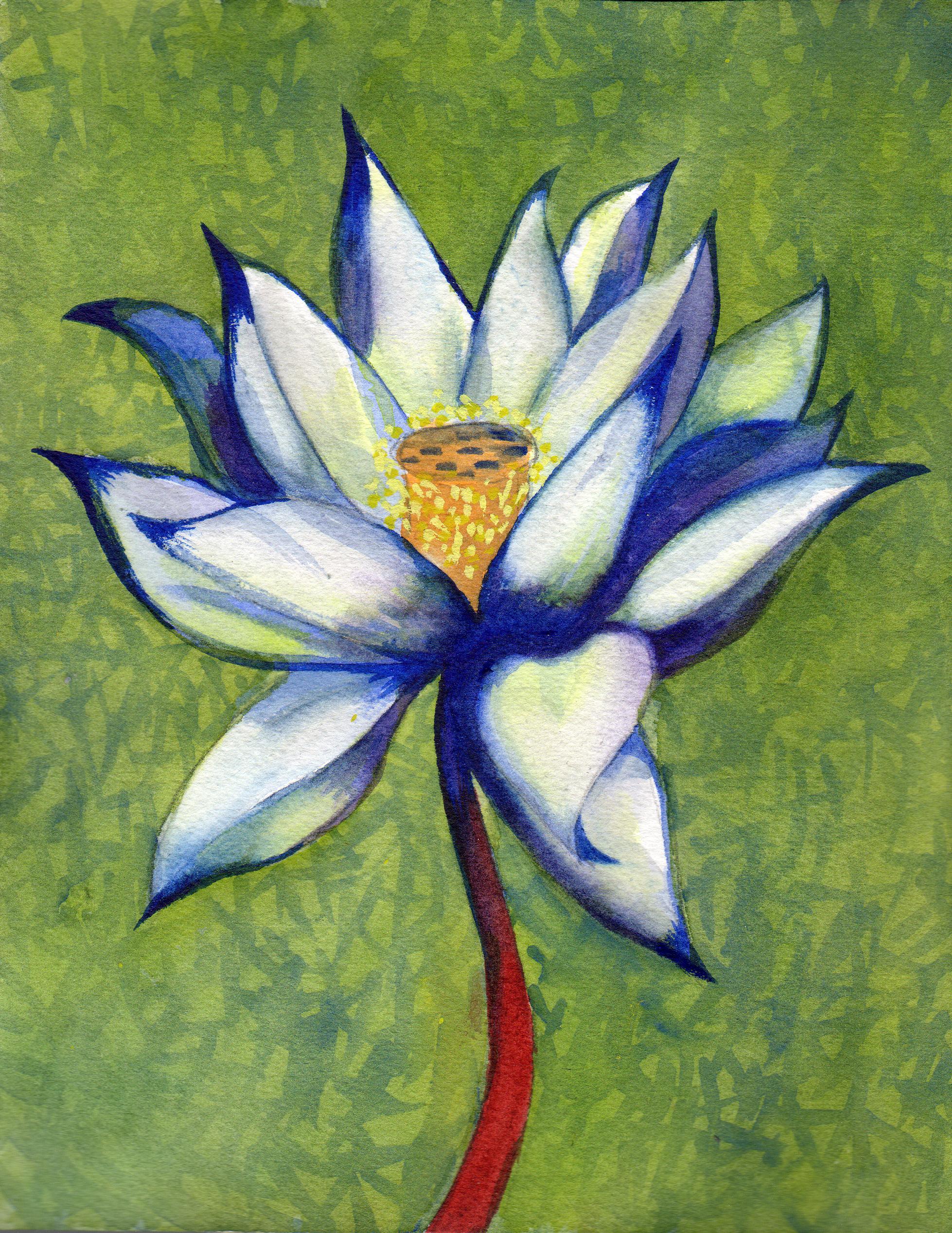small lotus 13 .png