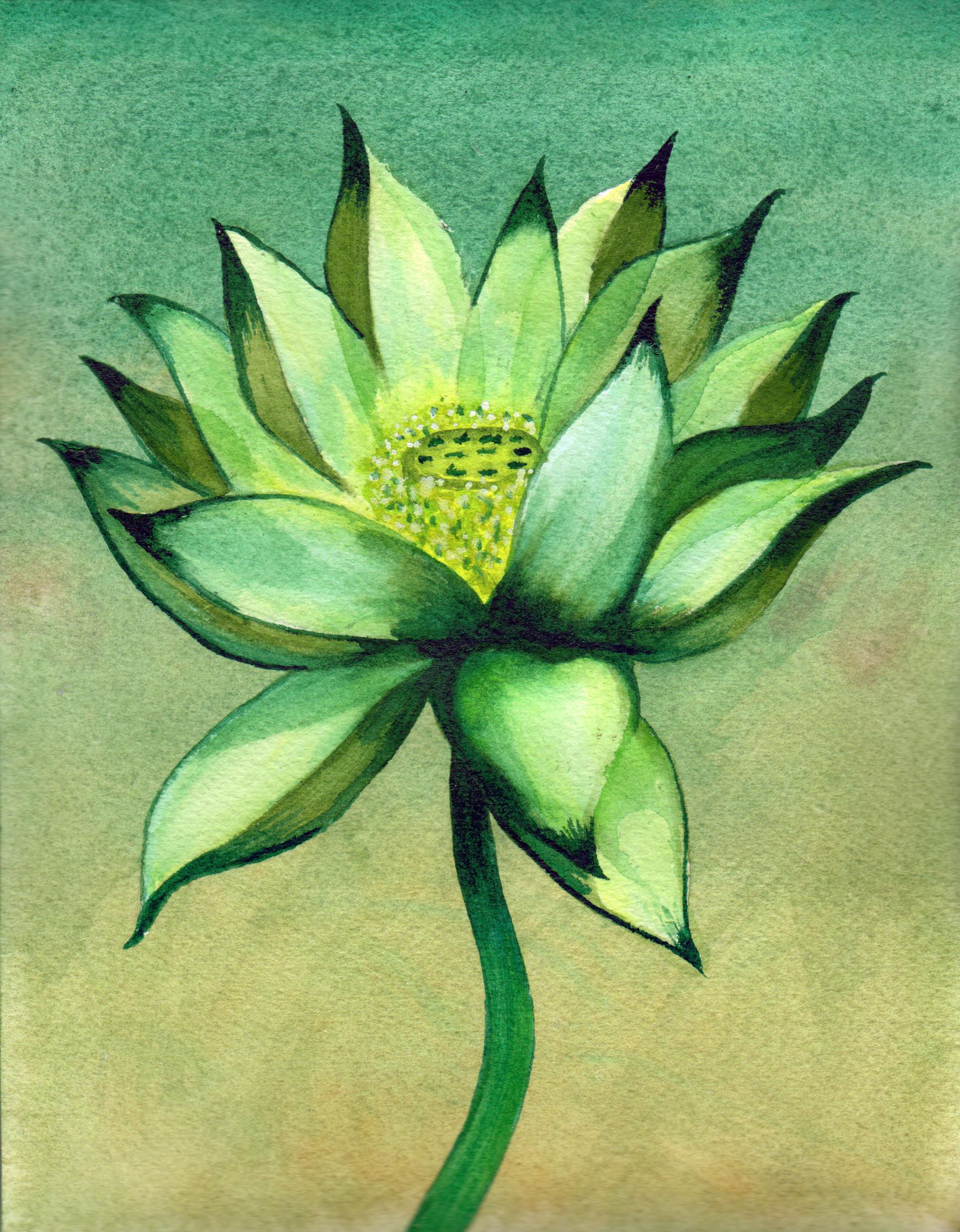 small lotus 14 .png