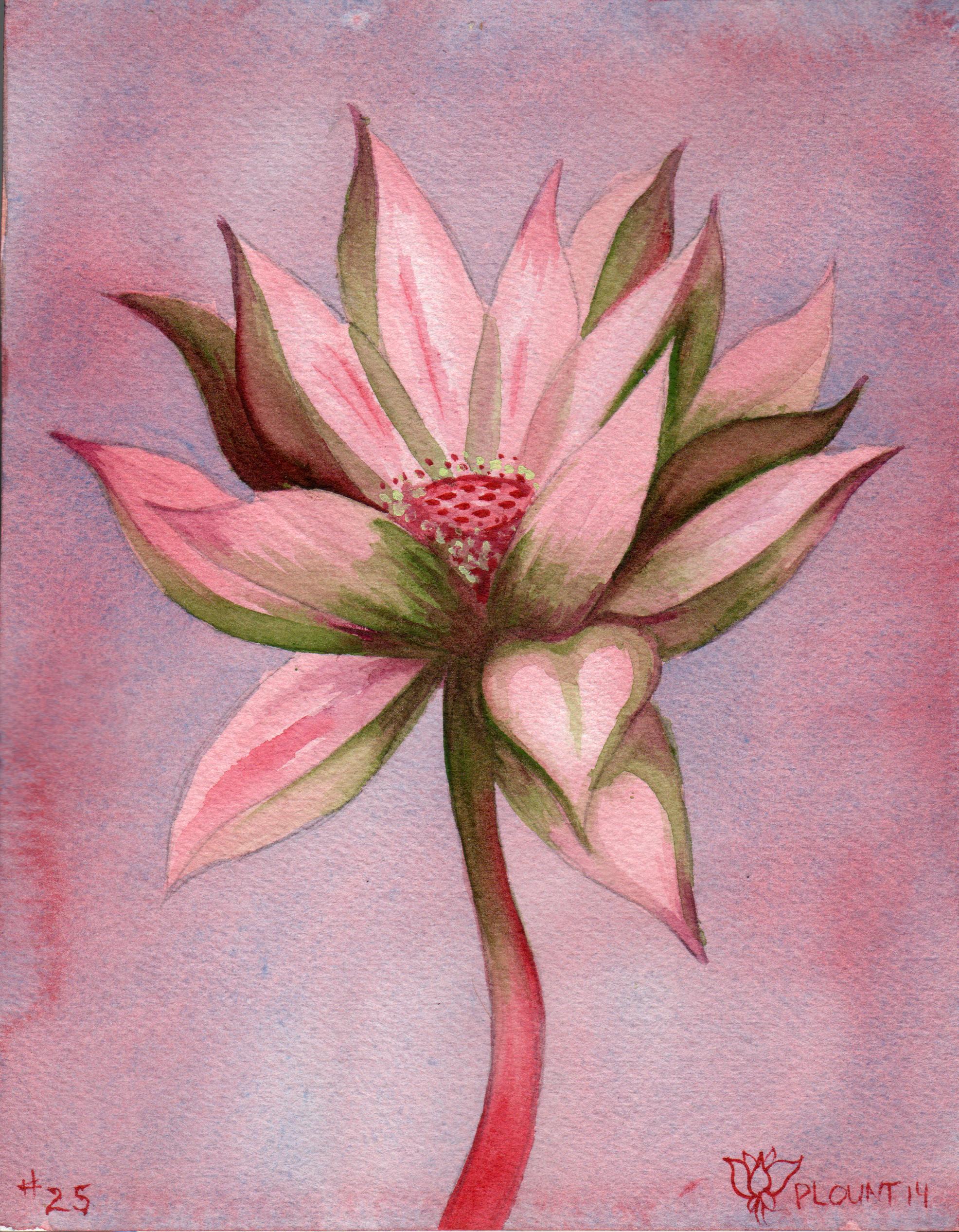 small lotus 25.png