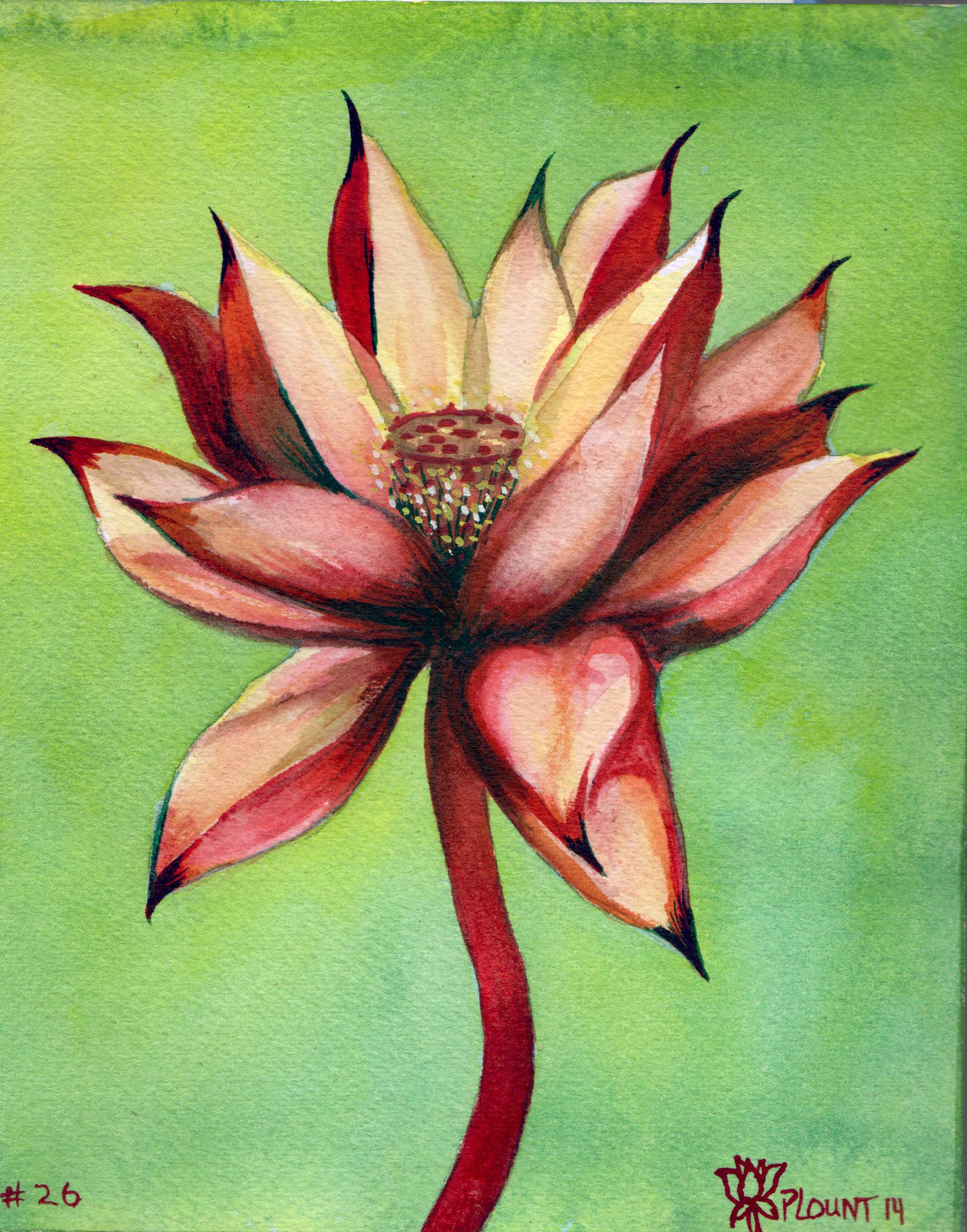 small lotus 26.png