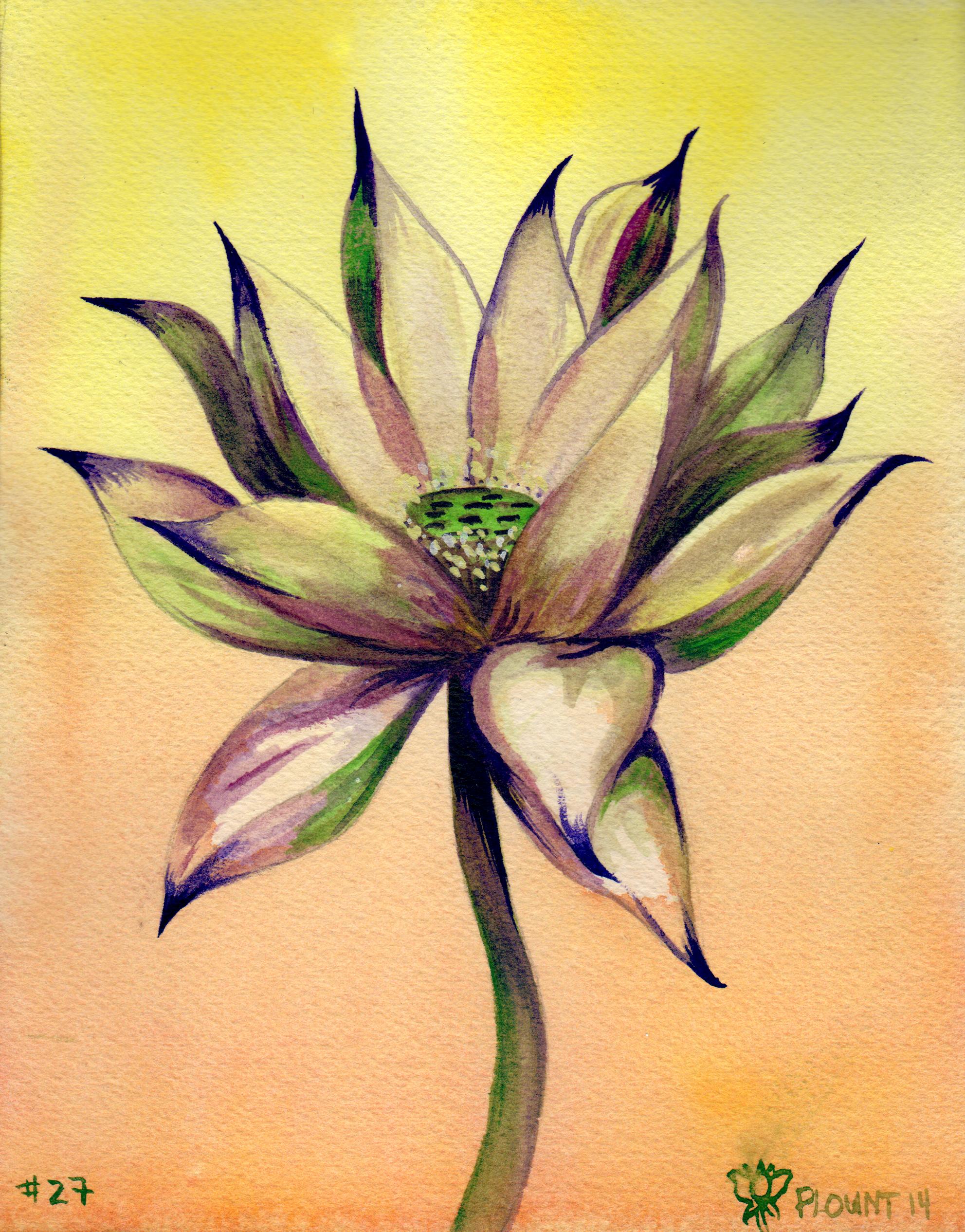 small lotus 27 .png