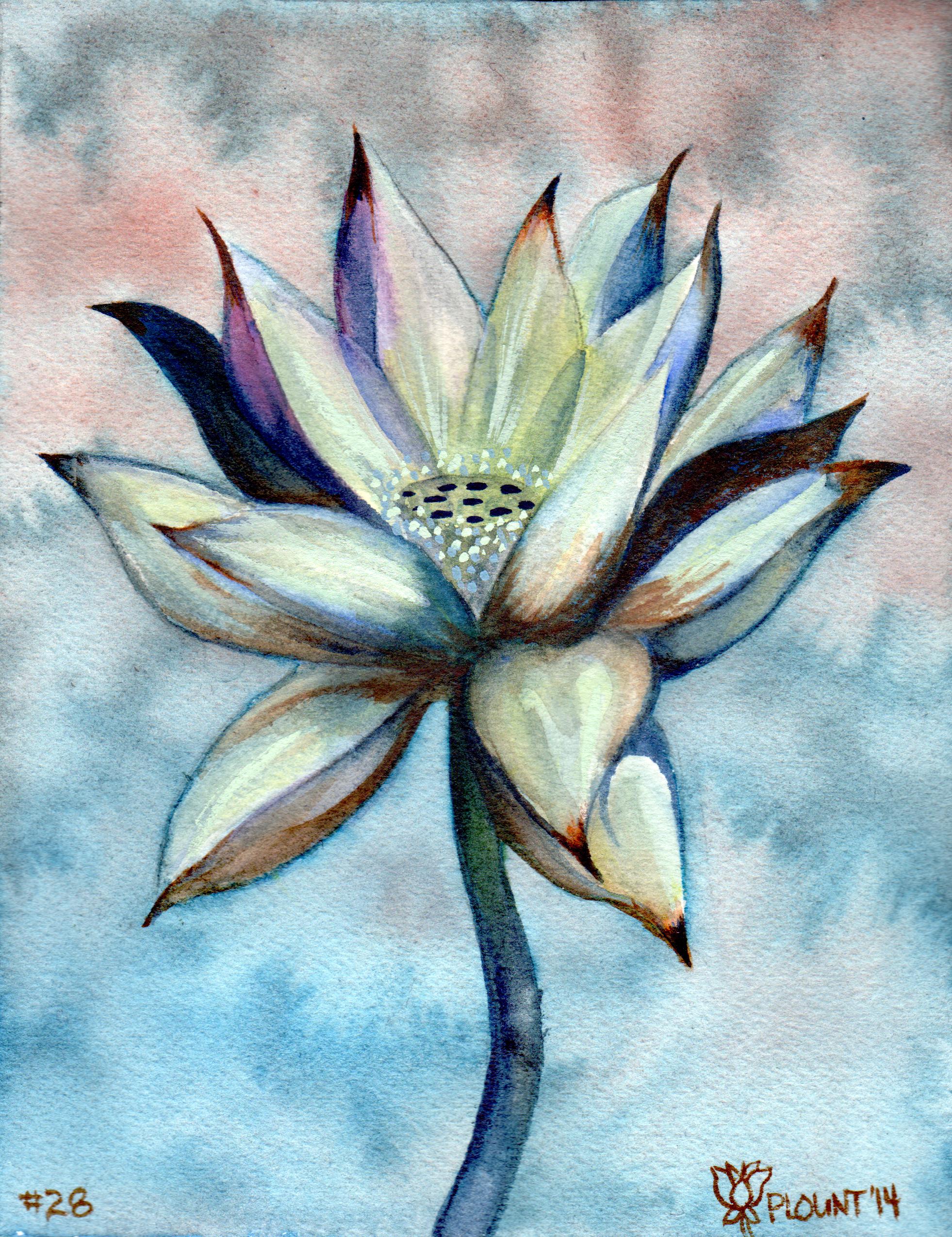 small lotus 28 .png