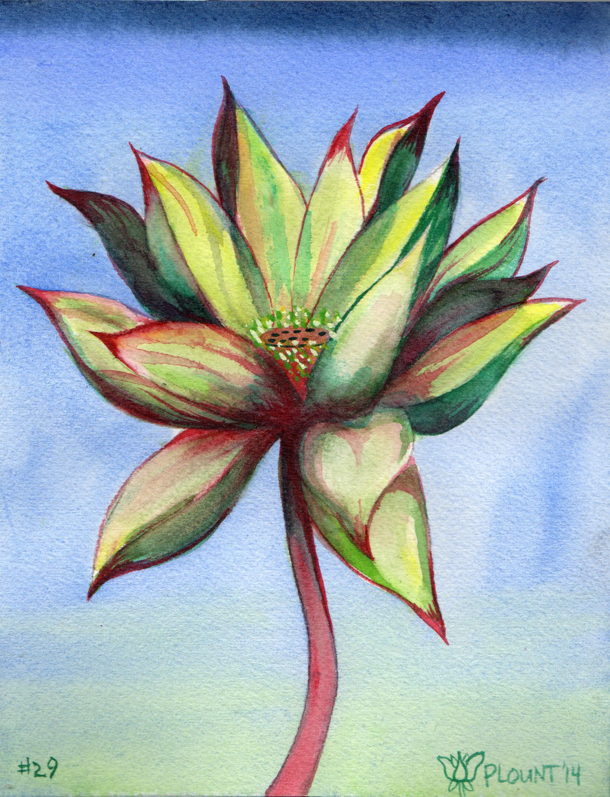 small lotus 29.png