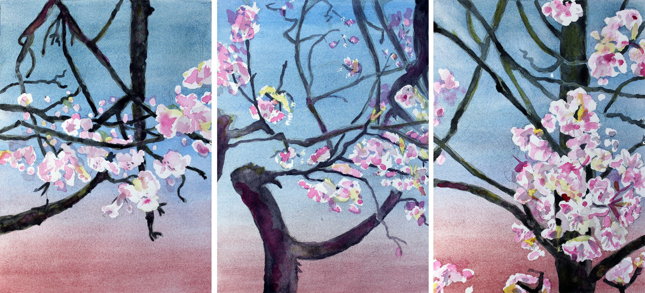 "Ronin: Japantown Cherry Tree Triptych  Watercolor on 140# Arches WC Paper 14"" x 30""  © 2015"