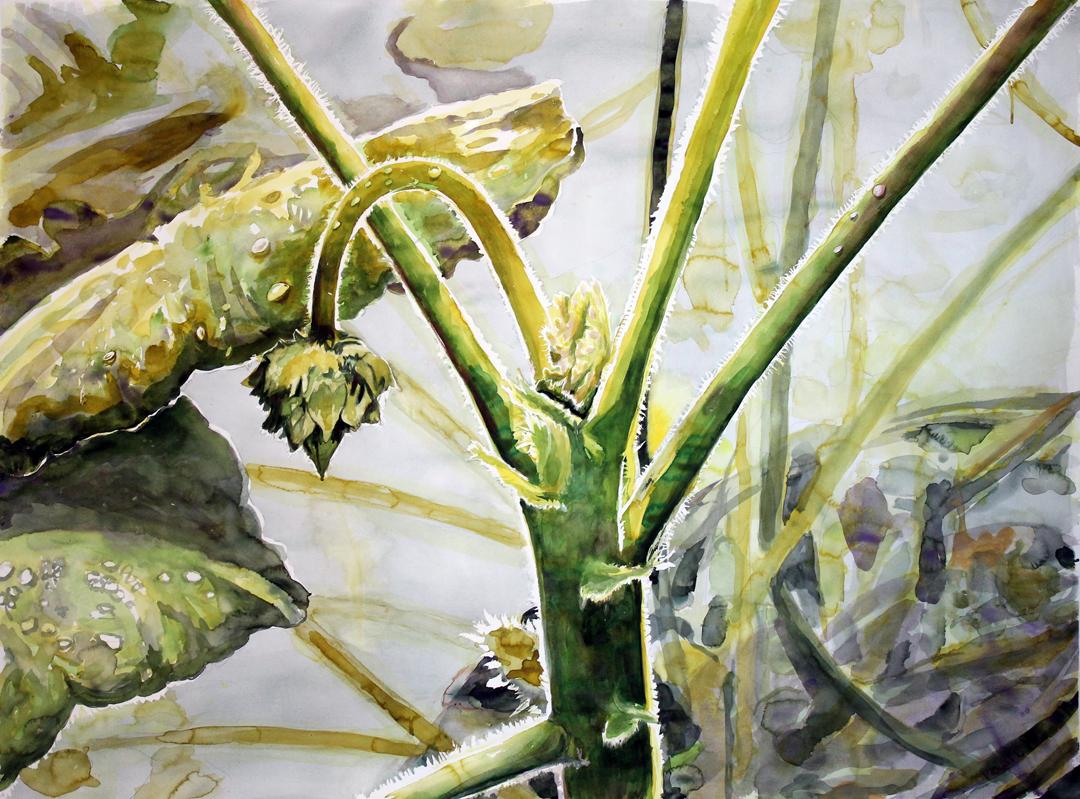 "Inner Light, Window Geranium (Portland, OR)  Watercolor on 140# Arches WC Paper 48"" x 60"" (121.92cm x 1152.4cm) © 2015"
