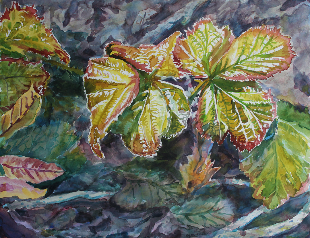 "New Leaf, Blackberry River Trail  Watercolor on 140# Arches WC Paper 22"" x 30"" (55.88cm x 76.2cm) © 2015"