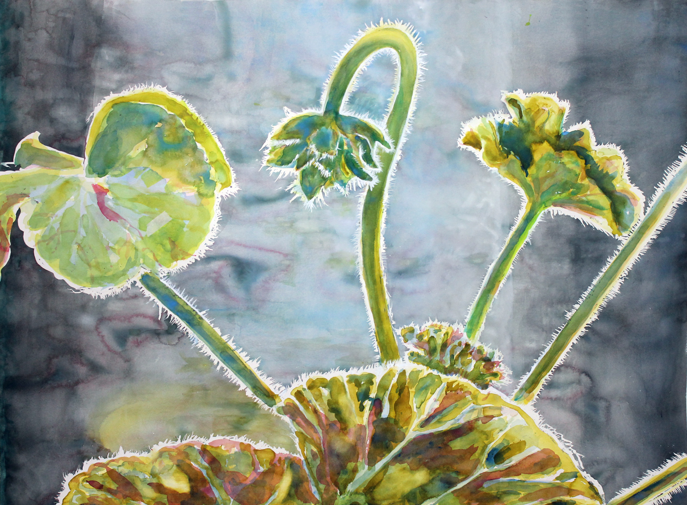 "Inner Light, Window Geranium, Portland Oregon, 2  Watercolor on 140# Arches WC Paper 48"" x 60"" (121.92cm x 1152.4cm) © 2015"