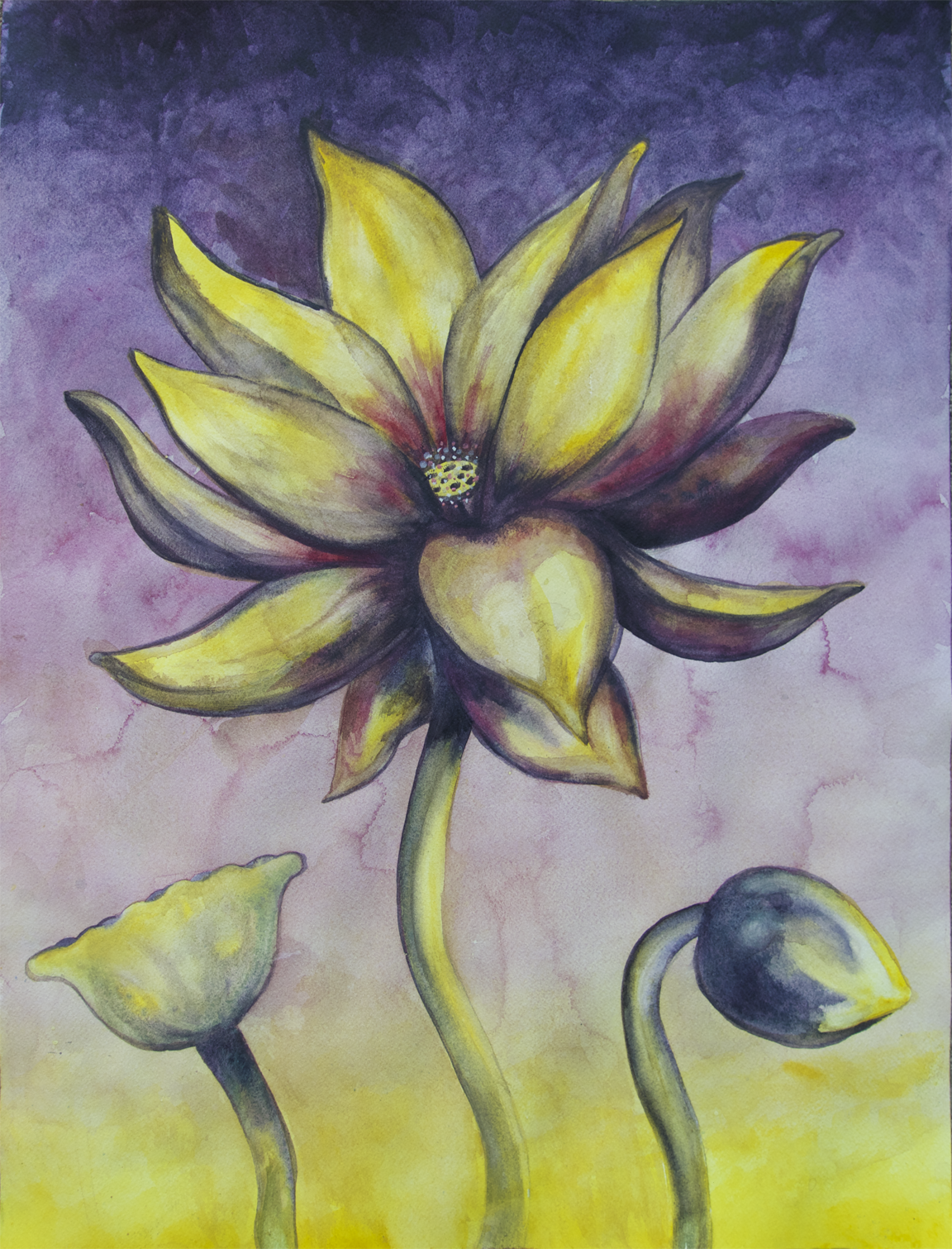 """Lotus, Number 4p, Series 2    Watercolor on Arches 140# WC Paper 24"""" x 18"""" (60.96cm x 45.72cm) © 2017"""
