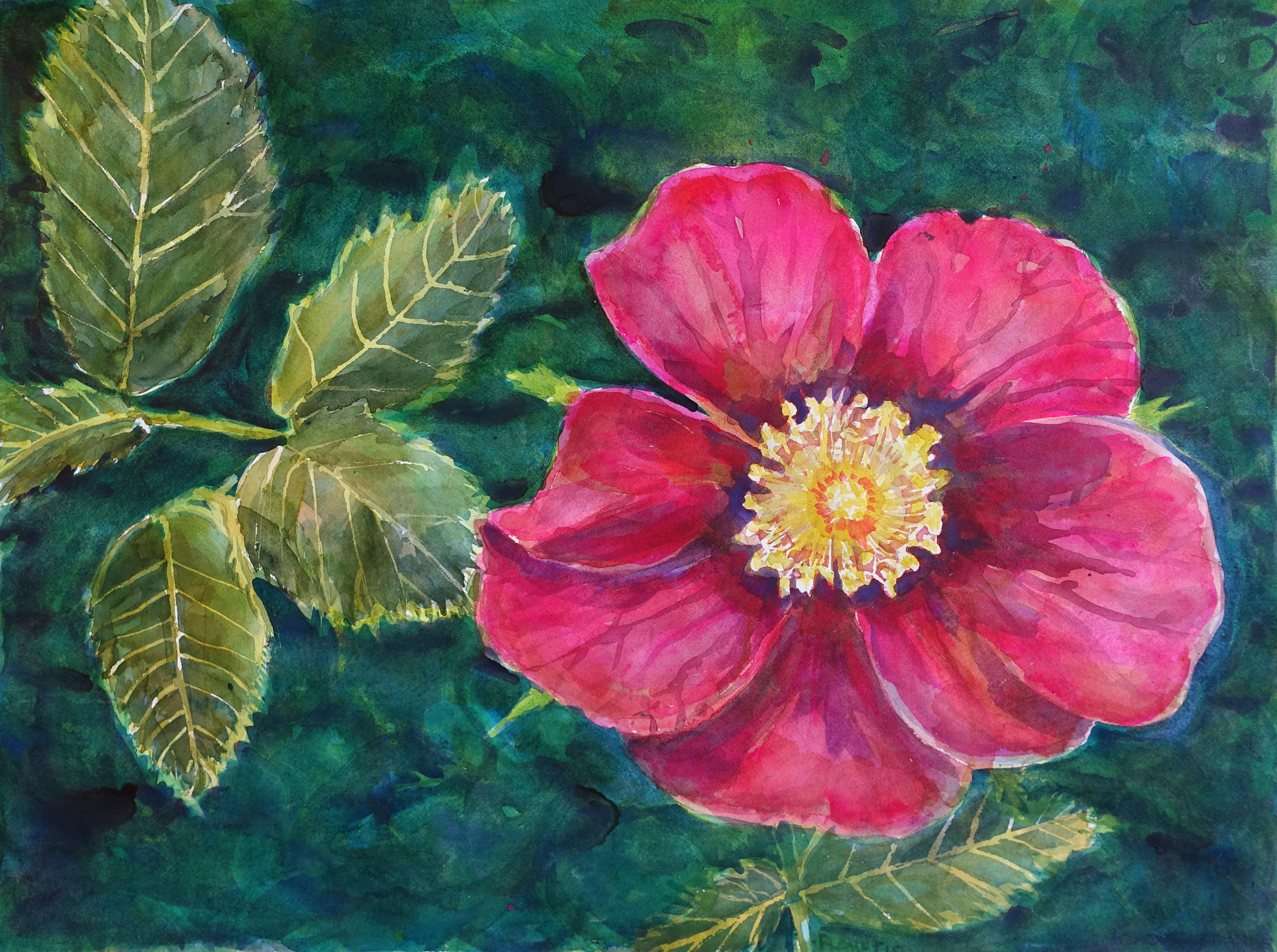 """Dad's Wild Roses, June 2015  Watercolor on 140# Arches WC Paper 22"""" x 30"""" (55.88cm x 76.2cm) © 2015-2018"""