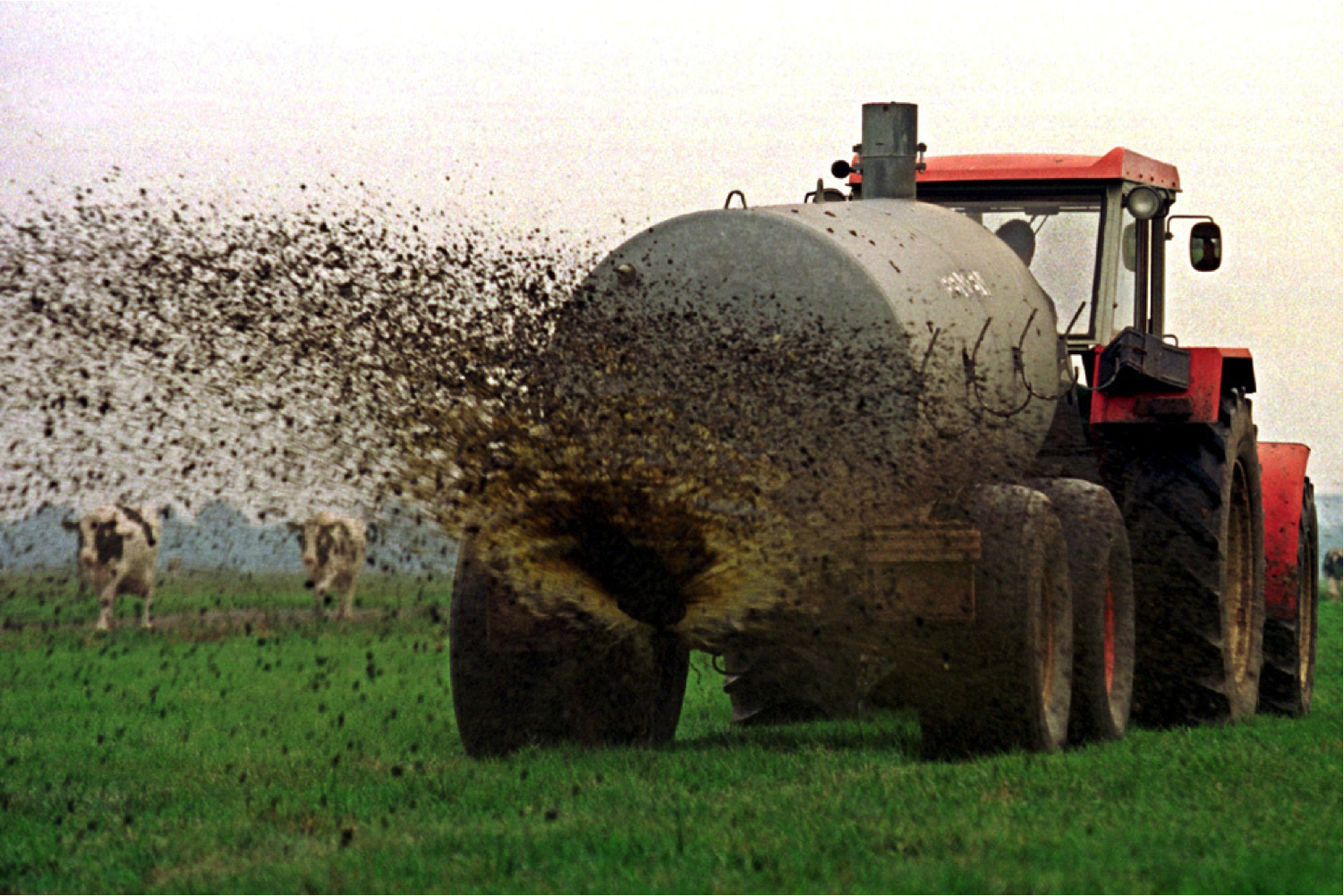 Manure is being brought out using a traditional deflector plate