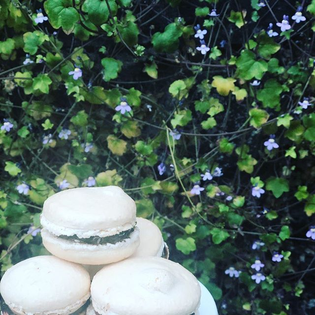 If we make summery treats it will feel more summer #macarons #traquairtreats #gardencafe@traquair