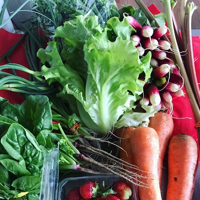 Our first CSA delivery at Binghamton University ❤️ We are so excited to partner with them! #csa #fresh #local