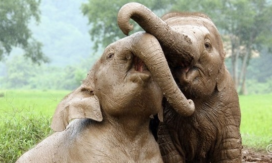Chiang Mai - Here we will meet with leaders of local non-profit organizations working on keeping at-risk children safe in school And, of course, soak in the culture and help bathe some local elephants.