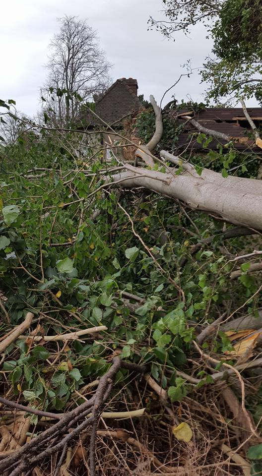 A lime tree that fell on a house during storm Ophelia