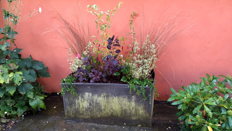 Hillwatering Lead planter planted 3.jpg
